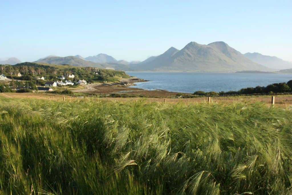 raasay barley trials july