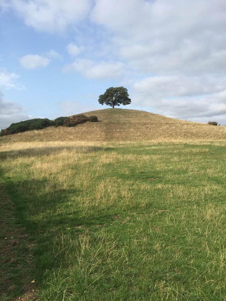 Apple tree on hill